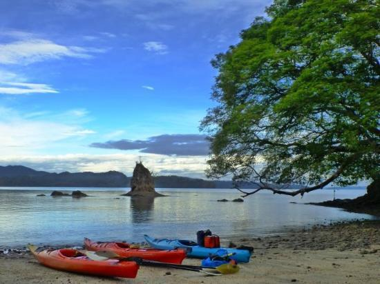 Bahia Rica Fishing and Kayak Lodge: On our beach, with the gorgeous Guanacaste tree