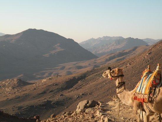 Mount Sinai: ;)