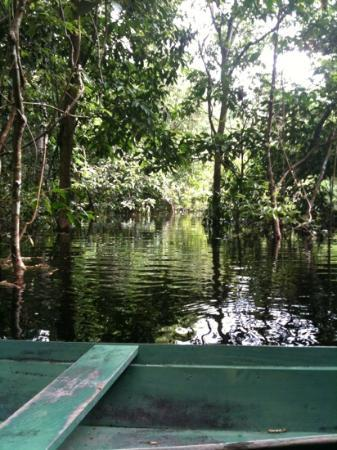 Anavilhanas Jungle Lodge: canoeing through the flooded forest