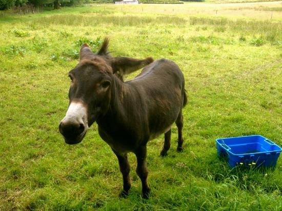 Lough Owel Lodge: Sonny the donkey in the front yard!