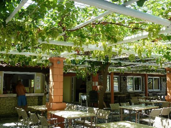 Mare Monte Beach Hotel: La treille du bar