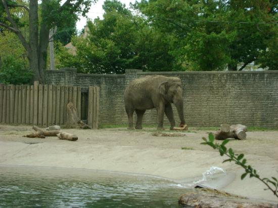 The Buffalo Zoo: elephant