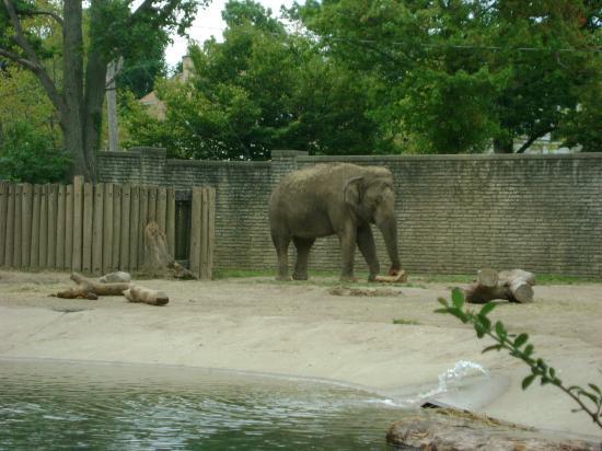水牛城動物園照片