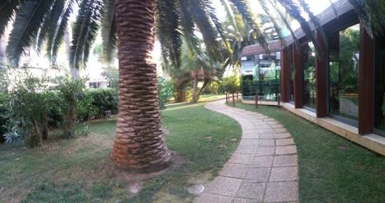 Hotel Baltic: il viale delle palme accanto al ristorante