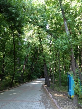 Gunluklu Pansiyon: we walked down this path to the beach