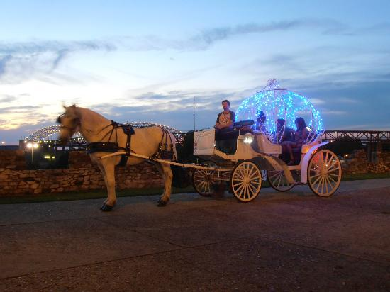 The Carriage Company