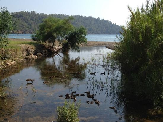 Gunluklu Pansiyon: creek pours into the sea