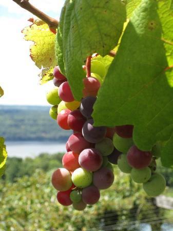 Seneca Lake Wine Trail : Chateau Lamoreaux Reneau Vineyards
