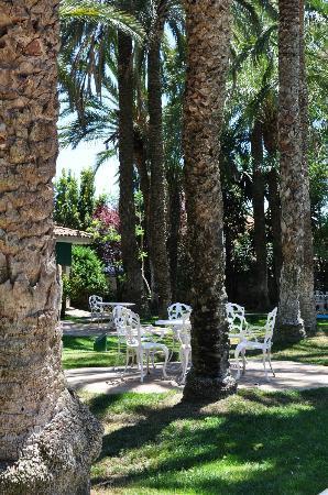 El Oasis Villas: The garden