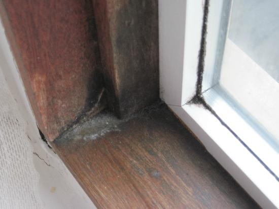 Seahaven House: Black mould on wooden window frame