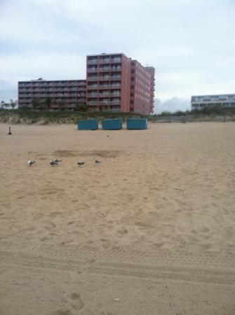 Holiday Inn Ocean City : view from beach