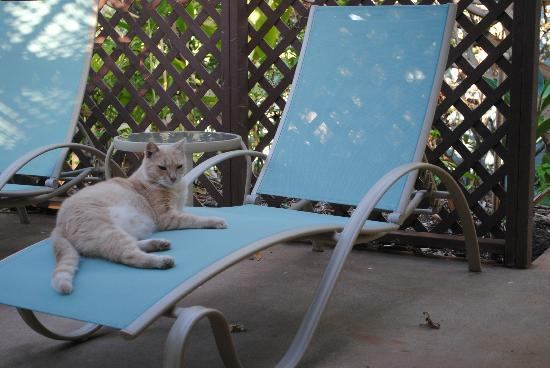 Hale Huanani Bed and Breakfast: A true Hawaiian cat!