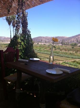 Organic Farm Tour at Huerta Los Tamarindos: vista de la huerta