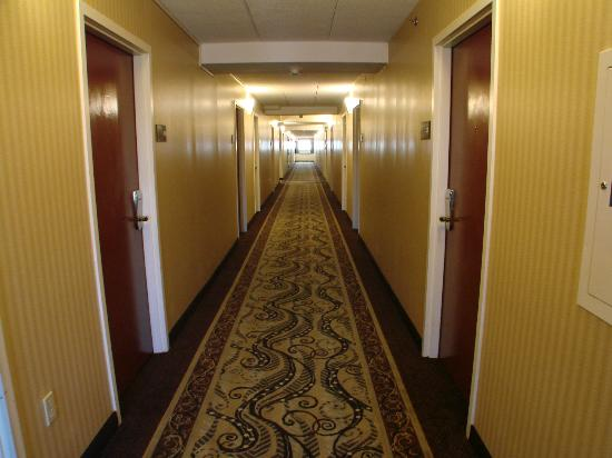 Hampton Inn Washington-Dulles Int'l Airport South: Decent stay at Hampton Inn Chantilly