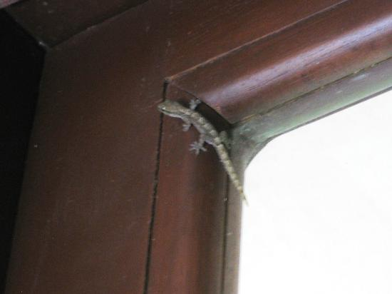 Hotel Playa Westfalia: Room sharing lizard