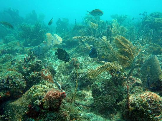 Diving Dominican Republic: The sun shining in on the coral bed of Viva Shallows