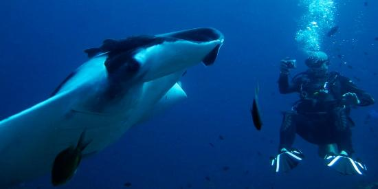 Similan Dive Center: Meeting the mantas at koh Bon