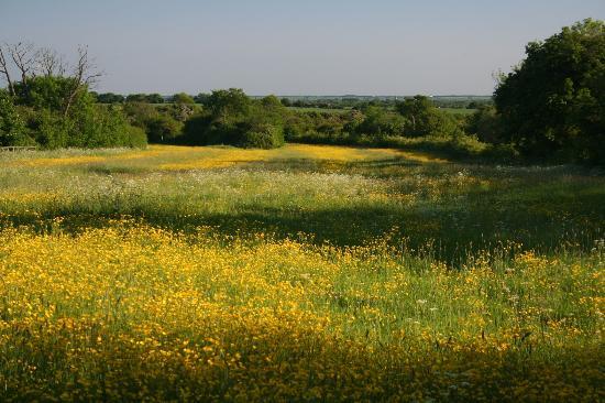 Fullards Farm: Field View