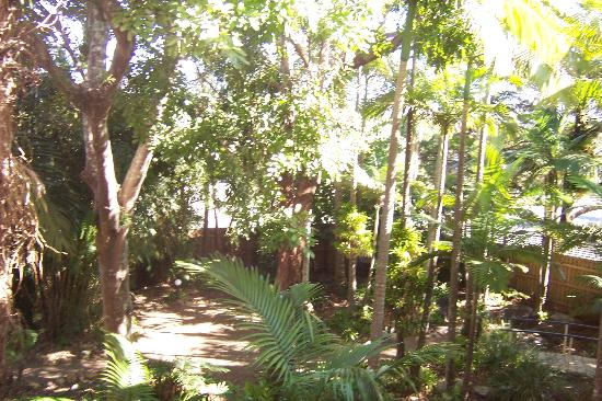 Noosa International Resort: hotel garden