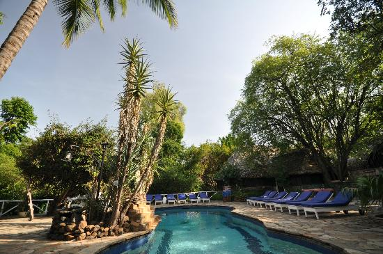 Fig Tree Camp: swimming pool area