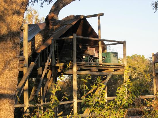 Rhino Walking Safaris at Plains Camp: Sleep Out Platform with Net Tent