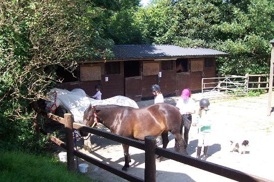 Gooseham Barton Stables & Farm Cottages: Getting ready for a ride
