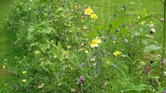Nerotalanlagen: Romantic wild flowers in the park