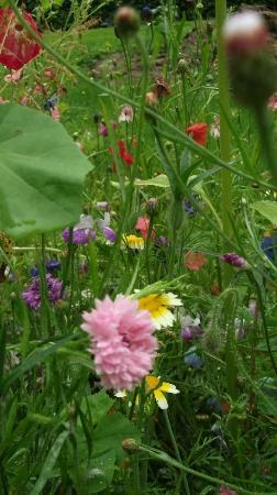 Nerotal-anlagen: Romantic wild flowers in the park