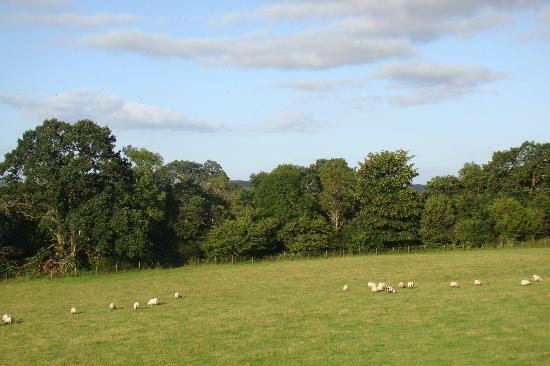 Blarcreen House: vue de la campagne environnante depuis la chambre