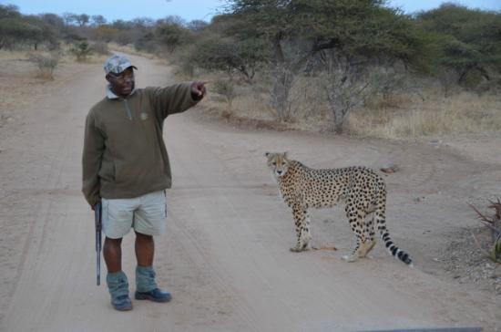 Tshukudu Game Lodge: Ranger leading walk with cheetah