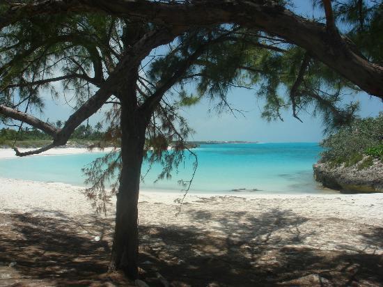 Paradise Bay Bahamas: Plage de Forbes