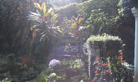 Hotel Atitlan: Garden view through spider web