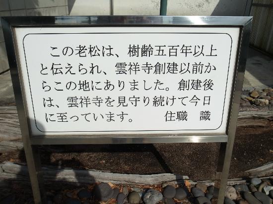 Unshoji Temple: 松の解説