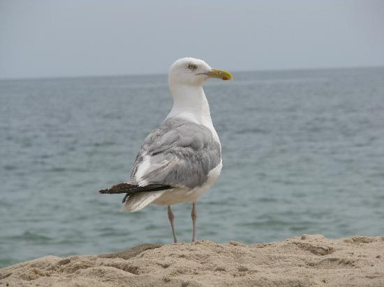 Main Beach : Seagull