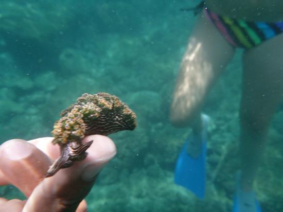 Almaco Diving & Tours: Sea snail