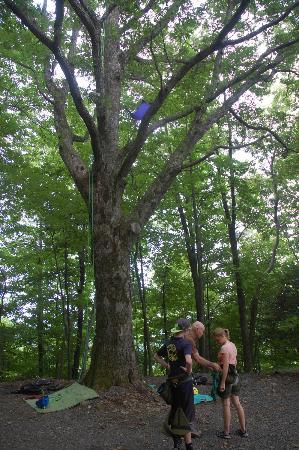 Primland: tree climbing