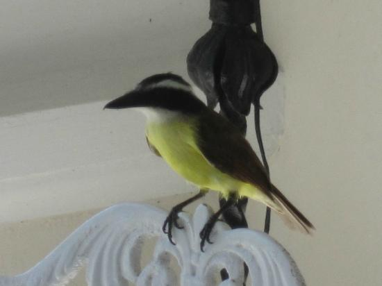 Rosedon Hotel: A bird seen at the afternoon tea.