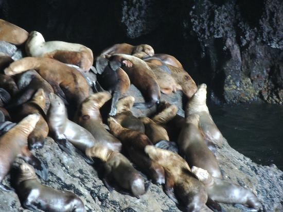 Seals and Otters and Sea Lion Caves inside cave