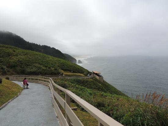 Seals and Otters and Sea Lion Caves outside on trail