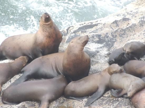 Seals and Otters and Sea Lion Caves seal singing