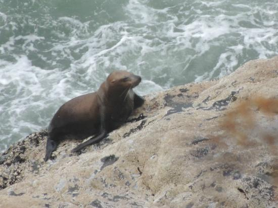 Seals and Otters and Sea Lion Caves outside cave