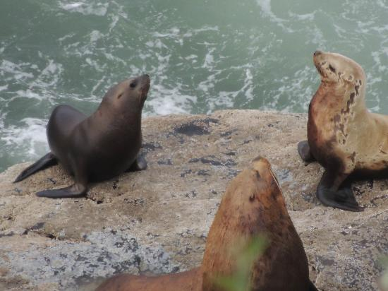 Seals and Otters and Sea Lion Caves outside caves
