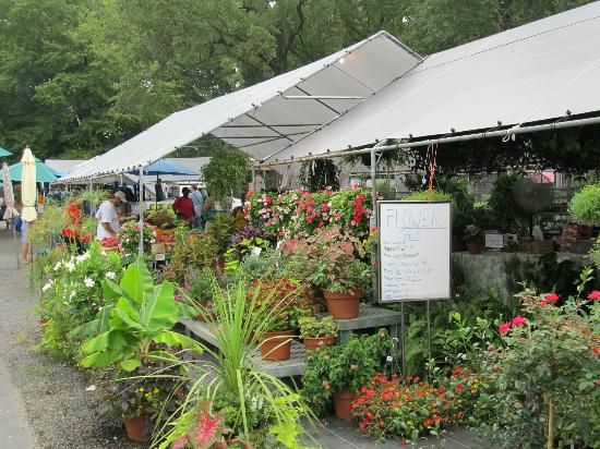 Flowers at Kings Drive Farmers Market - Picture of Charlotte, North ...