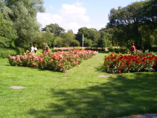 Rose Garden And Chinese Restaurant Foto Van Westbroekpark Den Haag Tripadvisor