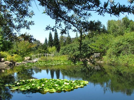 quarryhill botanical garden beyond beauty - Quarryhill Botanical Garden