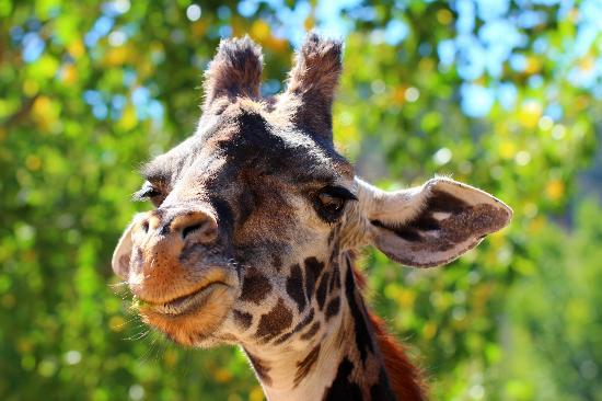 Safari West : Our Buddy :)