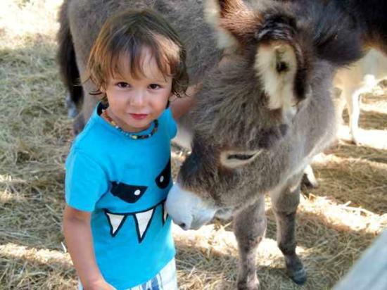 Agriturismo La Serra: Bei den Tieren