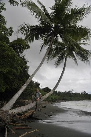 Corcovado National Park: Playa at Corcovado NP 