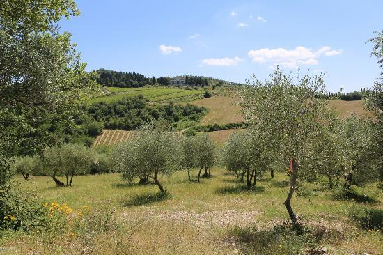 Villa  Vistarenni: Olive trees