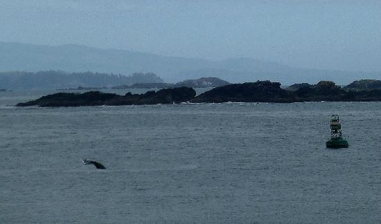 Wild Pacific Bed and Breakfast: Whale at W. P. T.